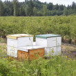Beehive Boxes - Stock Photo