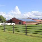 Large Dairy Farm — Stock Photo