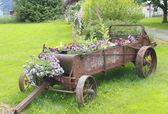Piantatrice del fiore tempo vecchio — Foto Stock