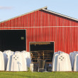 Calf Hutches — Stock Photo