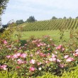 A Small British Columbian Winery - Stock fotografie