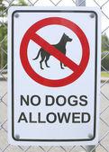 Köpek işareti izin yok — Stok fotoğraf