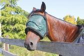 Protezione degli occhi per cavallo — Foto Stock
