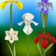 Iris blomma vektor illustrationer — Stockvektor