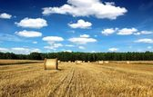 Beautiful countryside landscape sheaves and field — Stock Photo
