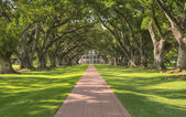 Oak Alley Plantation — Stock Photo