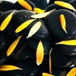 Yellow gerbera petals on black zen stone close up — Stock Photo #10977325