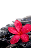 Red flower on black zen stones extreme close up — Stock Photo