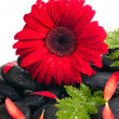 Red gerbera, petals and fern on black zen stone close up — Stock Photo