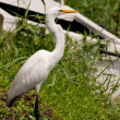 Stock Photo: White egret near old boat