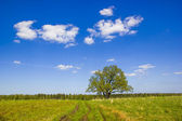 Single oak in May. — Stock Photo