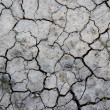 Stock Photo: Dry gray earth with cracks texture.
