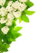Białe kwiaty kątowe pionowe ramy. — Zdjęcie stockowe