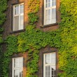 Stock Photo: Green wall