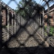 Royalty-Free Stock Photo: Auschwitz