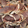 Crabs detail - Stock Photo
