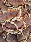 Crabs detail — Stock Photo