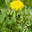 Dandelion — Stock Photo #10773819