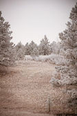 Snowy Tree Landscape — Stock Photo