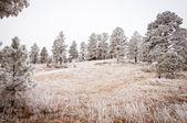 Snowy Tree Landscape — Stock Photo