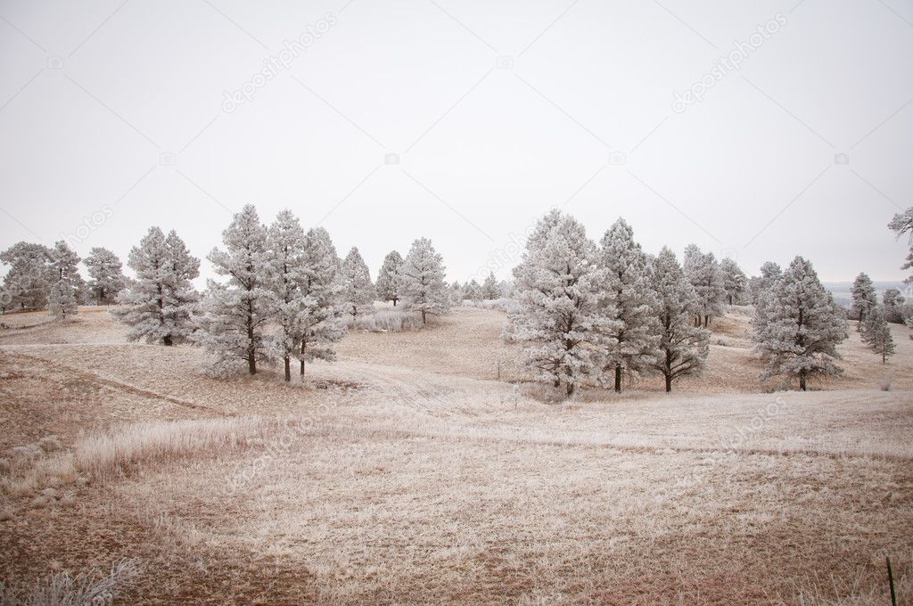 Grey snowy tree landscape in the Colorado winter — Photo #11903909