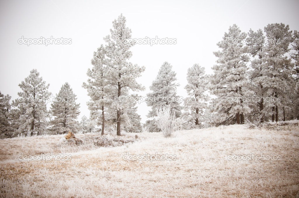 Grey snowy tree landscape in the Colorado winter — Stock Photo #11903928