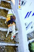 Traditional white Santorini donkey — Stock Photo
