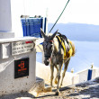 White galloping horse in white village Thira, Santorini — Stock Photo