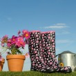 Stock Photo: Gardening concept five