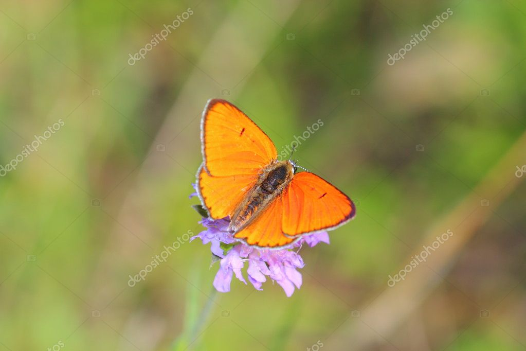 Butterfly  Stock Photo #10900844