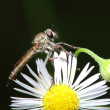 Insect — Stock Photo