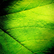 Green Leaf Background — Stock Photo #11545798