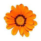 Blüte — Stockfoto