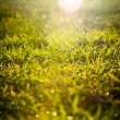 Grass Sunrise — Foto de Stock