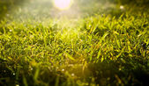 Grass Sunrise — Stock Photo