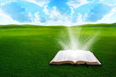 Bible on grassy field — Stock Photo