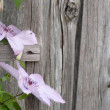 Pink flowers on a wooden wall — Photo