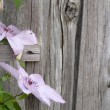 Stock Photo: Pink flowers on wooden wall