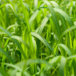 Green grass background texture — Stockfoto