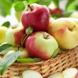 Fresh apples — Stock Photo #11018934