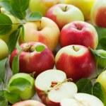 Fresh apples — Stock Photo #11559209