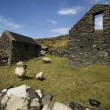 Typical Old Sheep cottage with pasture located inside Dingle Pen — Stock Photo