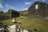 牧场位于内丁格尔笔典型老羊小屋 — 图库照片