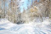 Hermoso bosque de nieve de abril — Foto de Stock