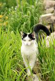 Cat in green grass — Stock Photo