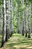 Alley in juli berk grove — Stockfoto