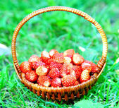 Wild forest strawberries in bamboo wicker basket — Stock Photo