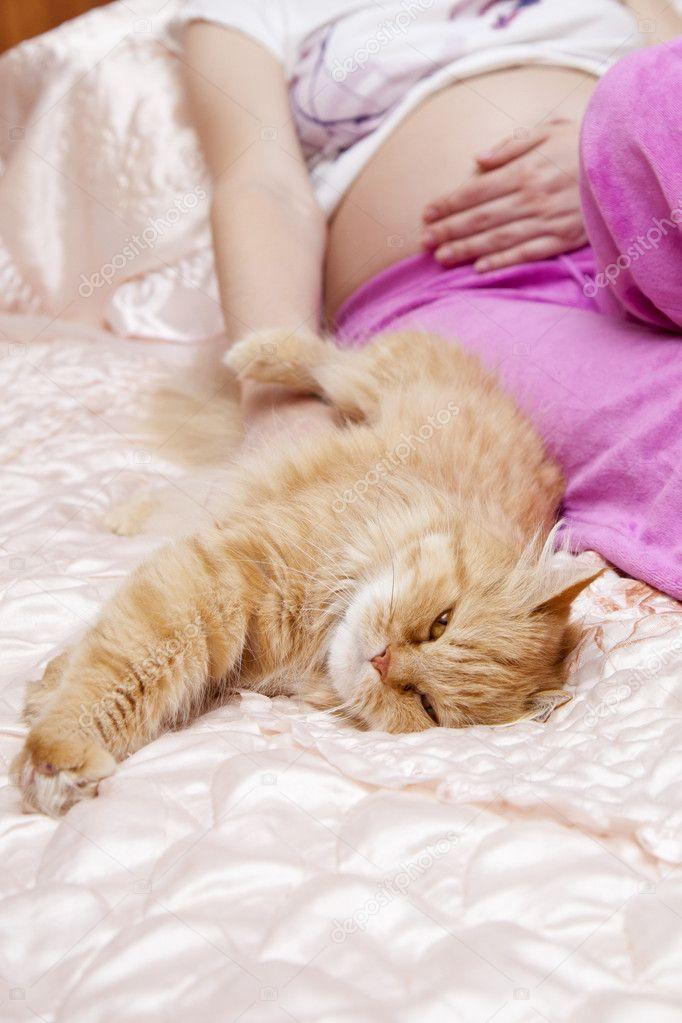 Кошки чувствуют беременных женщин