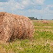 Royalty-Free Stock Photo: The hay in the field