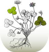 Ilustratorzy kwiatów — Wektor stockowy